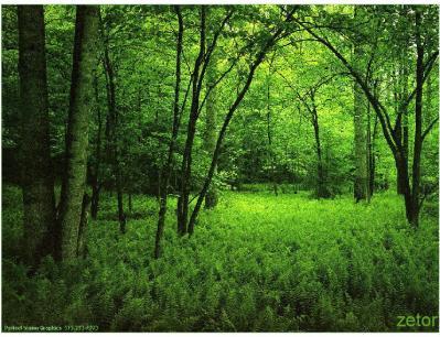 El aura del bosque